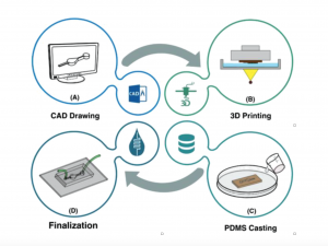 Rapid Softlithography Using 3D‐Printed Molds
